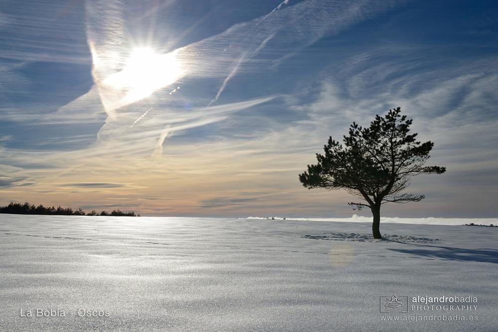 Bobia-nieve-10-w